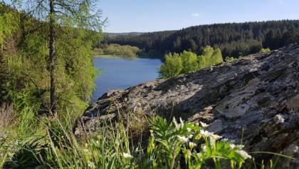 Aussichtspunkt Trageburg mit Blick auf die Rappbodevorsperre