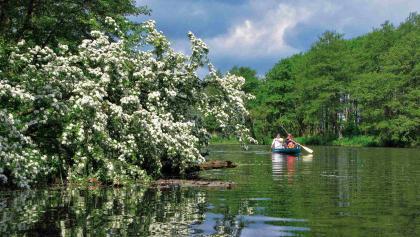 Kanufahrer erkunden die urwüchsigen Ufer der Peene