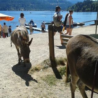 Wasserscheue Tiere