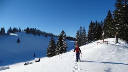 Schneeschuhwanderung vom Niederalpl auf den Herrenboden