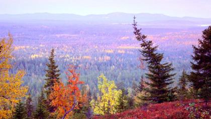 Autumn in Kuusamo
