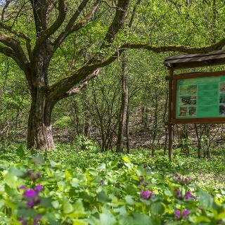 A Cserhátszentiváni tanösvény táblája mesél a Hármas-forrásról