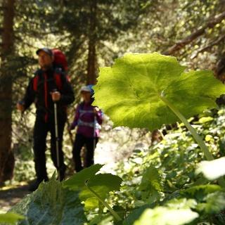 Auf idyllischen Wald- und Wiesenwegen wandert man entlang des Amerbaches.