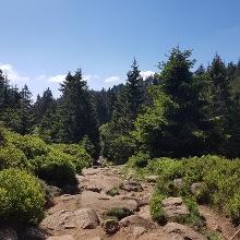 Aufstieg Eckerloch zum Brocken