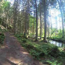 Foto von Mountainbike: Burgentour • Bayerischer Wald (22.05.2018 22:13:21 #1)