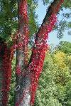 Farben des Herbstes bei Burleswagen  - @ Autor: Dr. Konrad Lechner  - © Quelle: Hohenlohe + Schwäbisch Hall Tourismus e.V.