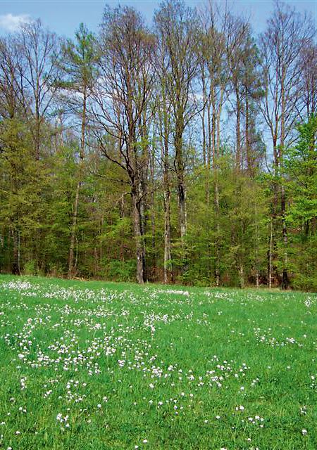 Waldrand im Frühling  - @ Autor: Dr. Konrad Lechner  - © Quelle: Hohenlohe + Schwäbisch Hall Tourismus e.V.