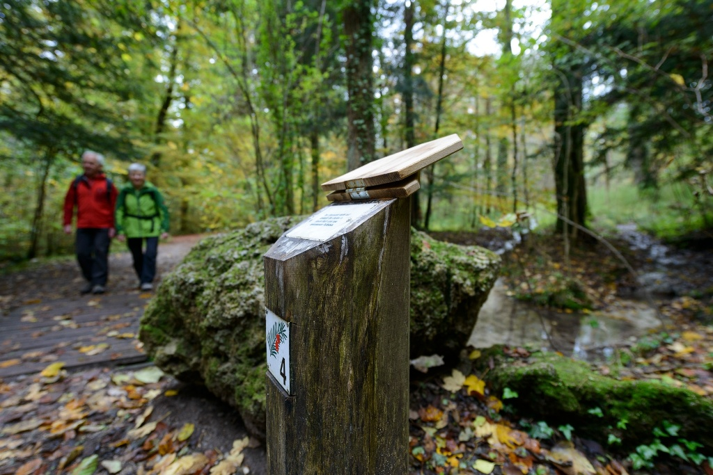 Infotafeln am Paterzeller Eibenpfad (Wolfgang Ehn)