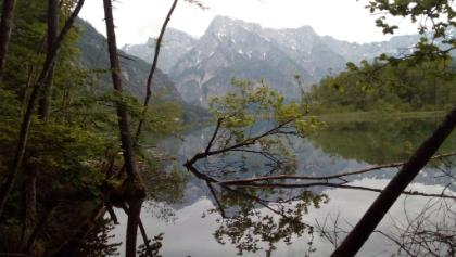 Am Ufer des Almsees