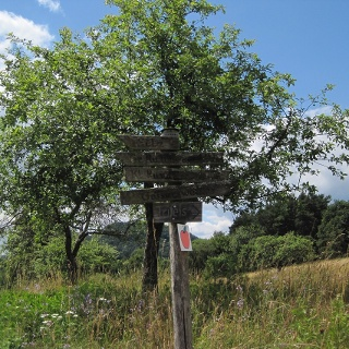 Obstbäume am Apfelweg