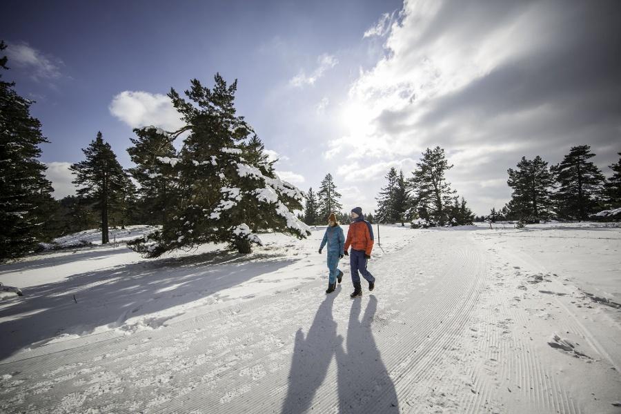 Premium-Winterwanderweg  Schneewalzer in Albstadt