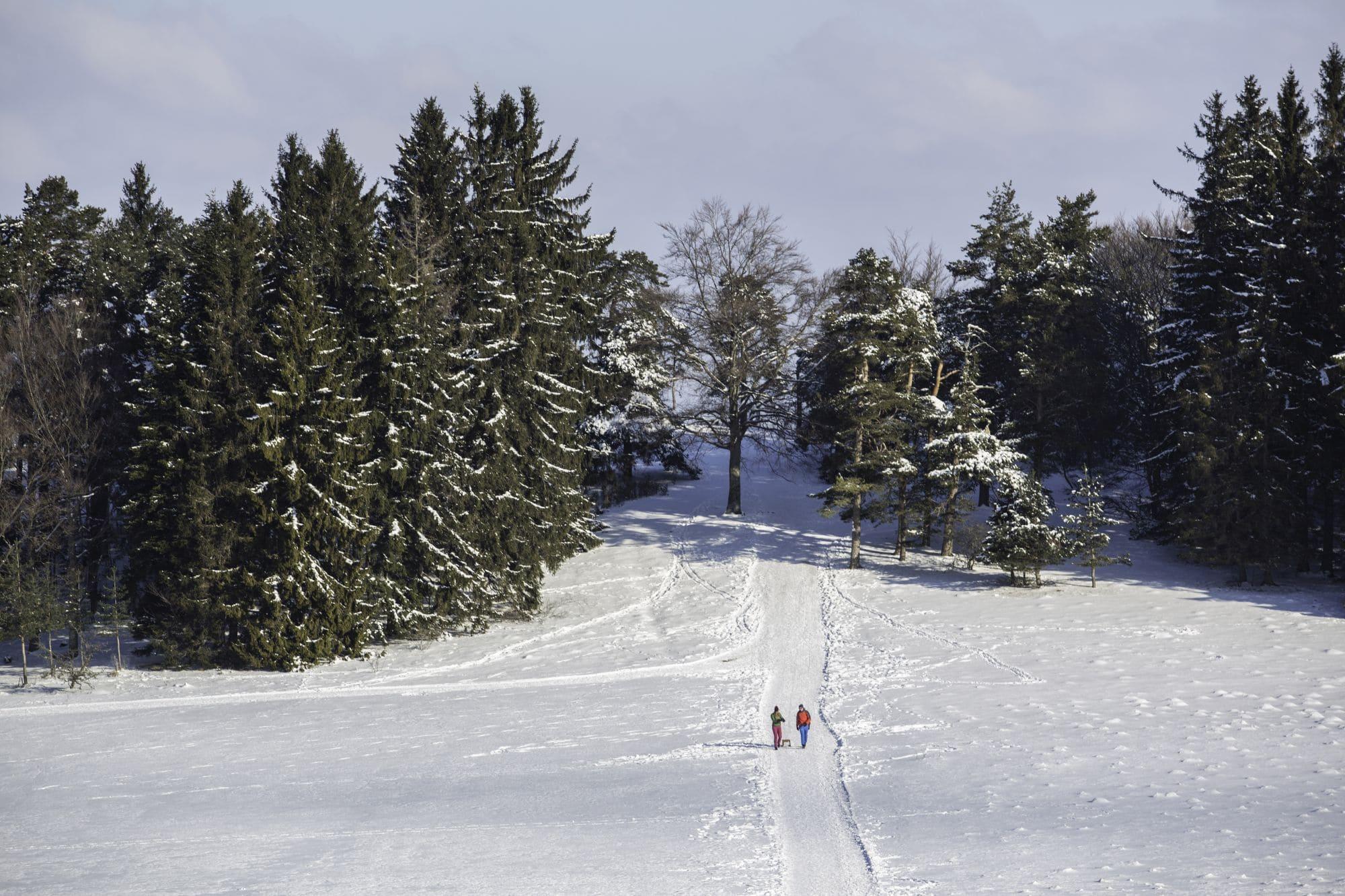 Premium-Winterwanderweg Wintermärchen