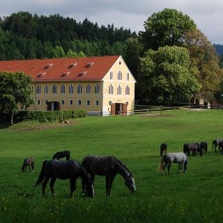Außenhof Wilhelm mit Junghengsten