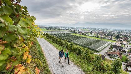 Rheintaler Weinwanderweg