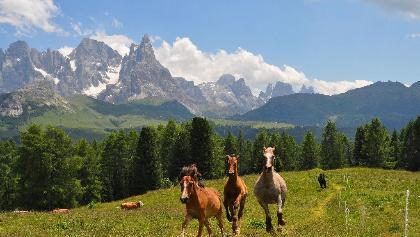 Horses and Pale di San Martino