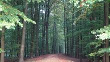 Sehestedt-Kleine Waldrunde