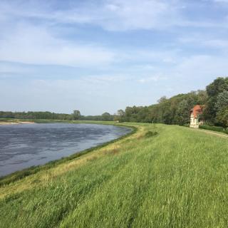 Blick auf die Elbe bei Wörlitz