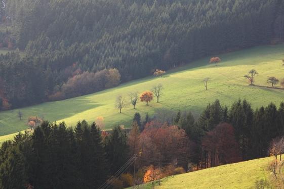 Großer Hansjakobweg 3. Etappe: Oberharmersbach - Zell a. H.