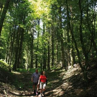 Wandern in der Solling-Vogler-Region