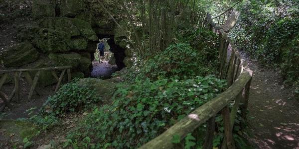 Árnyékos ösvények a vácrátóti botanikus kertben