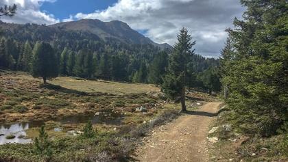 Panoramawanderung am Vigiljoch mit Blick auf den Hochwart.