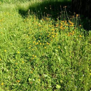 Wildblumen Anfang Juni