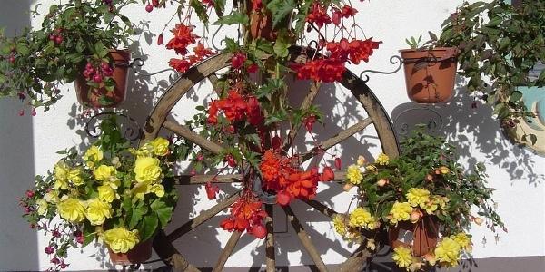 Blumen - Wagenrad