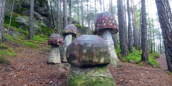 Sentiero dei funghi