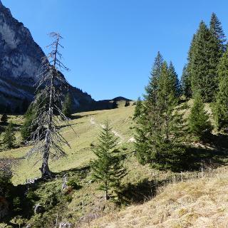 Anstieg zum Breitenberg oberhalb der Bergstation