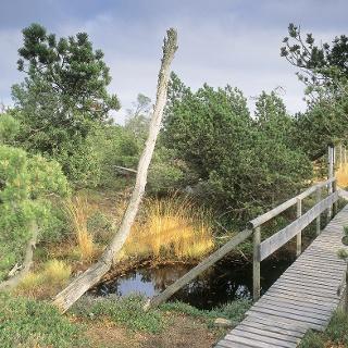 Brücke Georgenfelder Hochmoor
