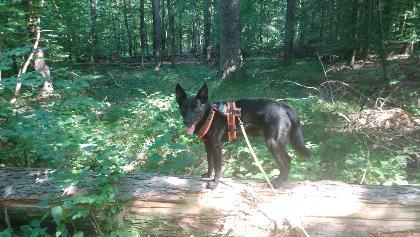 Balance Übungen mitten im Wald!