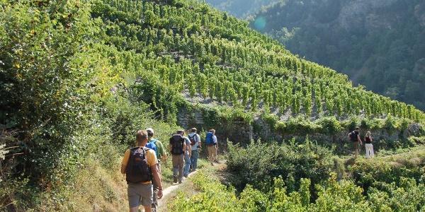 Wanderung auf dem höchstgelegenen Weinberg in Europa