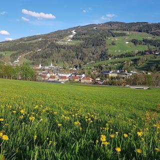Blick von der Tauernblickrunde nach Schladming - im Vordergrund eine Frühlingswiese