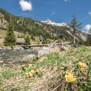 Der Riesachbach am Weg zur Preintalerhütte