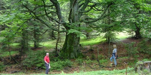Wald rund um den Großofen