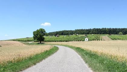 Wanderweg/ Weinberge