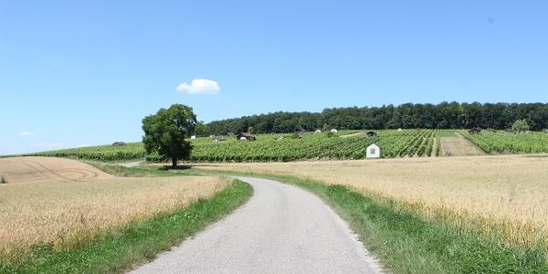 Wanderweg & Weinberge am Hasensprung