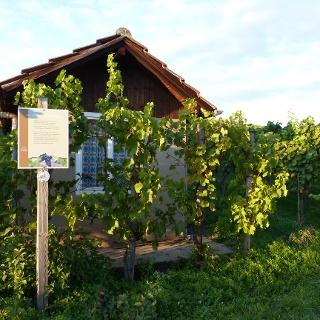 Weinlehrpfad Horrheim