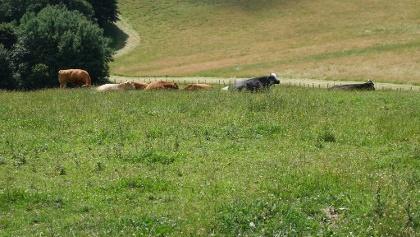 Am Start- und Endpunkt der Wanderung gibt es in den warmen Monaten tierische Begleitung
