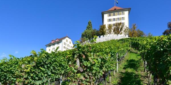 Schloss Heidegg mit Reben