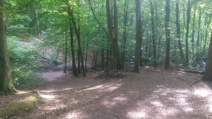 Auf schmalem, teils steinigem Waldpfad geht es zurück ins Tal.