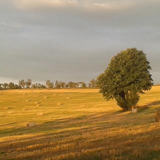 Herbstfeld an der Alten Salzstraße