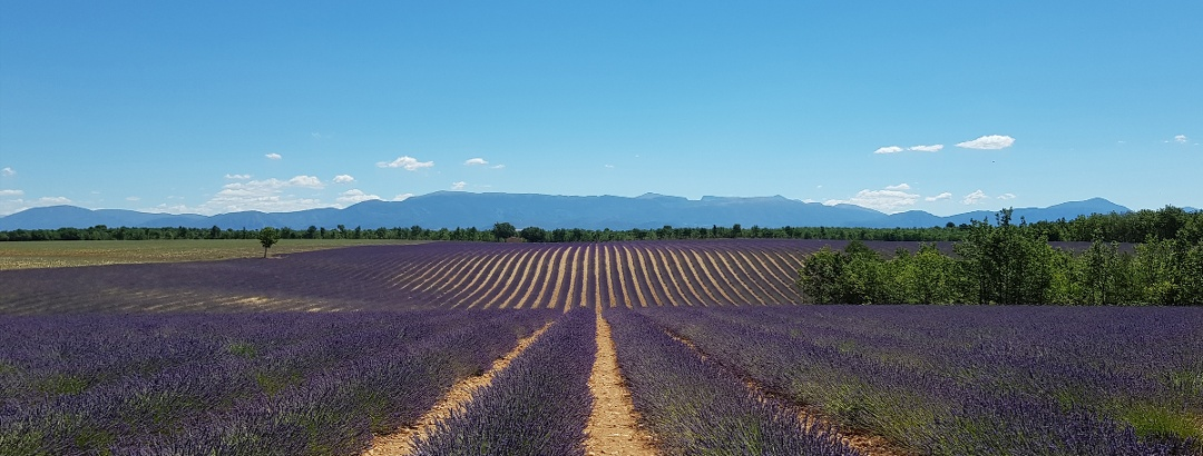 Die Provence bei Valensole