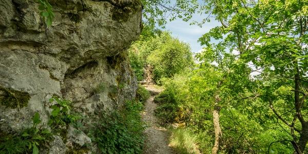 A barlanghoz vezető ösvény