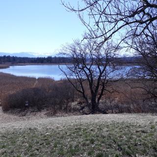 Gartensee bei Seeshaupt