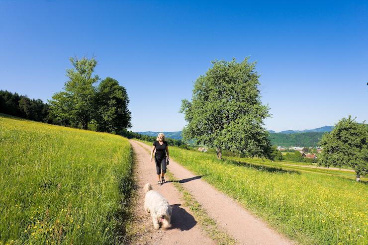 Zell a. H. - Panorama-Kneipp-Rundweg