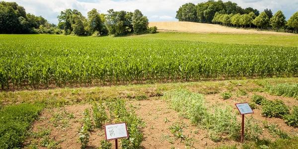 Landwirtschaftliches Schaufeld