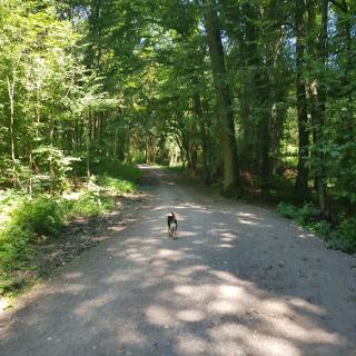 Buchenwaldweg