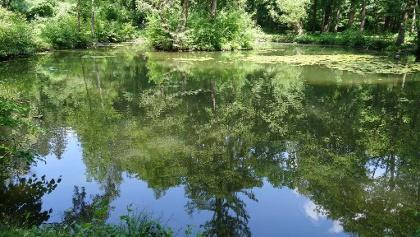 Teich im unteren Bereich der Schwarzenbergallee
