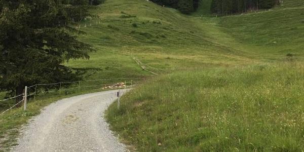 Nach der Weide geht es links über den Wiesenhang zu Hütte.